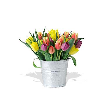 Cubeta con Tulipanes
