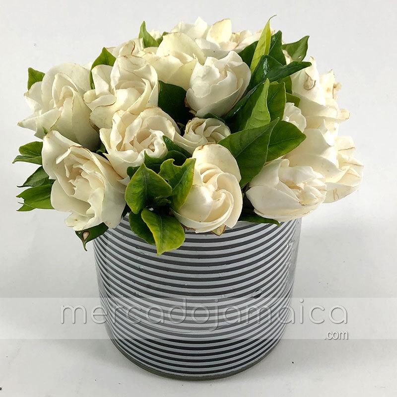 Perfume Gardenias