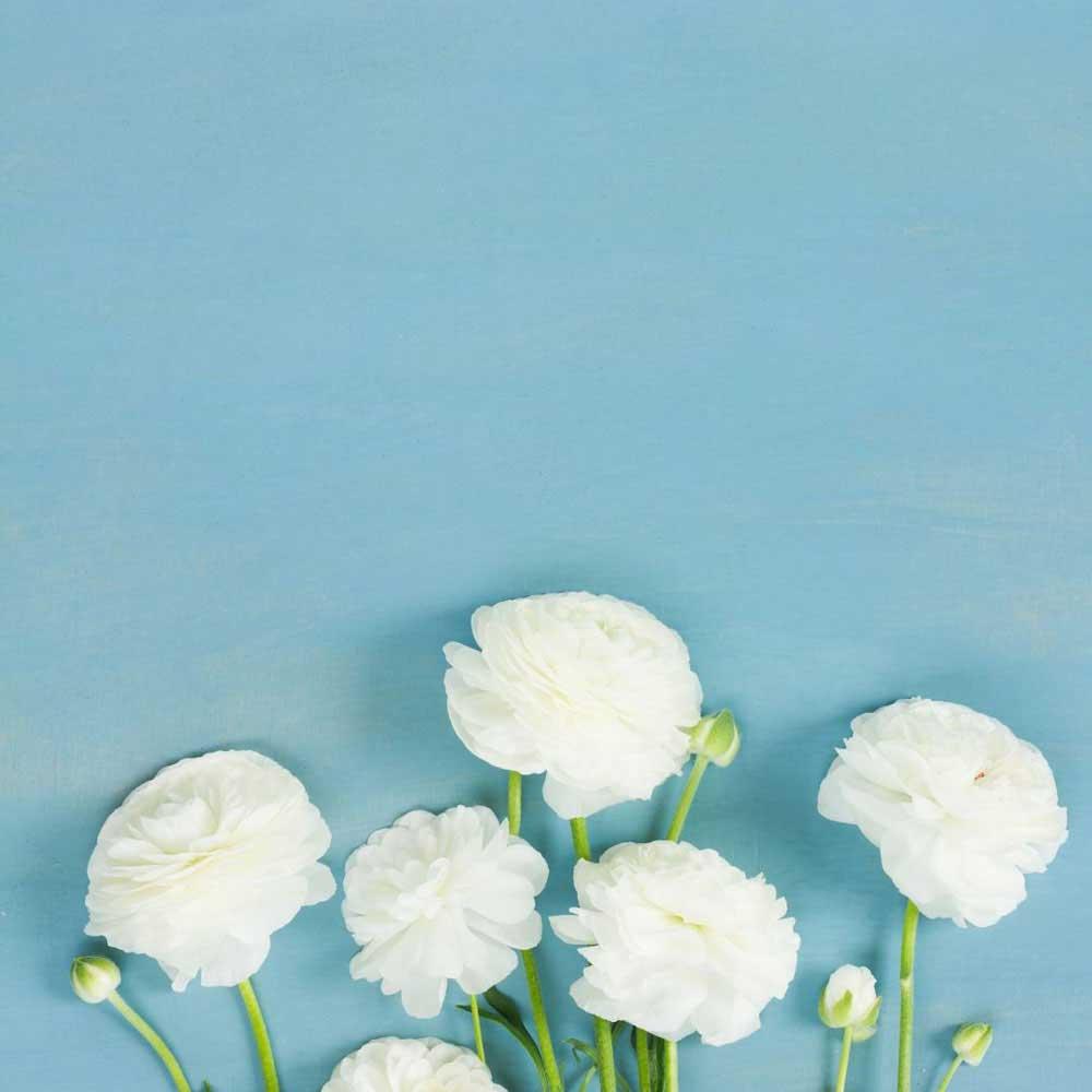 10 Flores Ranunculus Blancos